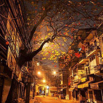 Tháng 10, tháng của mùa thu, tháng của những kẻ cô đơn giữa mùa đẹp nhất.