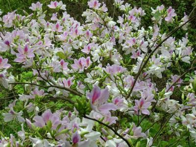 Hoa rừng Tây Bắc