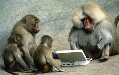 Chuyện vui đầu năm con khỉ