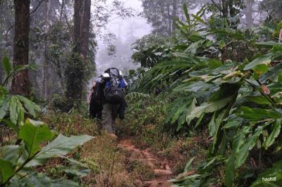 Bí kíp bỏ túi cho chuyến khám phá rừng