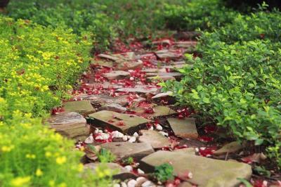 Mê mẩn với những con đường hoa  đẹp nhất Việt Nam