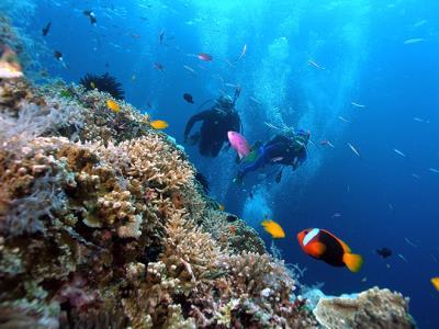 Đi Bộ Dưới Đáy Biển ở Nha Trang thu hút du khách
