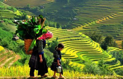 Đi đâu & chơi gì ở Lào Cai ?
