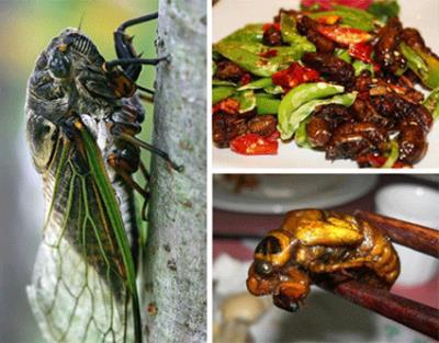 Món ăn ưa thích của người Lào