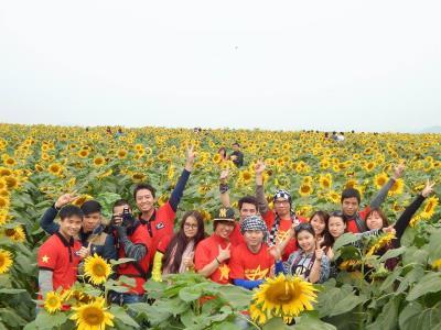 Thông tin mùa hoa Hướng Dương tại Nghệ An 2015.