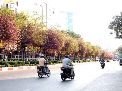 """Những """"con đường hoa"""" nên thơ giữa lòng Sài Gòn"""