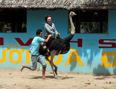 Vinh Long down to eat fruits and riding ostriches