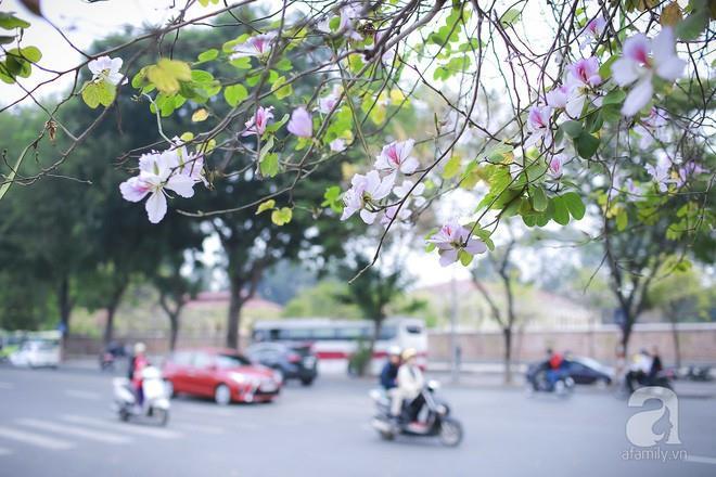 Xao xuyến và êm dịu những sắc hoa tháng 3 Hà Nội