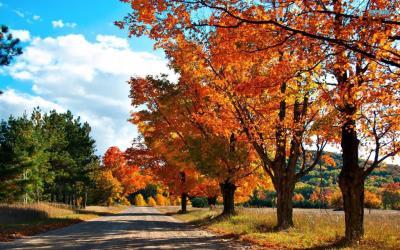 Đóng góp bộ hình nền mùa thu cho destop