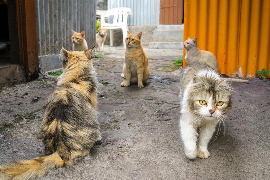 Cirque De Mafate (Pháp): Ngọn núi của hoa Rum và những chú mèo ngố