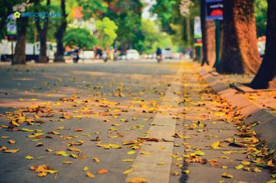 Hà Nội vào thu rồi - Cùng tìm hiểu thêm về 6 tiết khí mùa thu