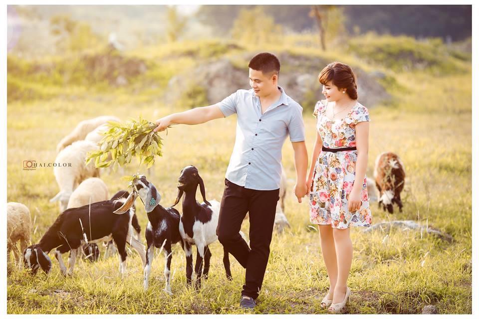 Chia sẻ thảo nguyên ngập hoa và tạo dáng bên đàn cừu giữa lòng Hà Nội