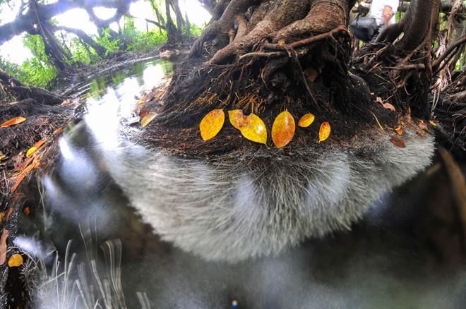 Thế giới huyền bí giữa rừng già Nam Cát Tiên
